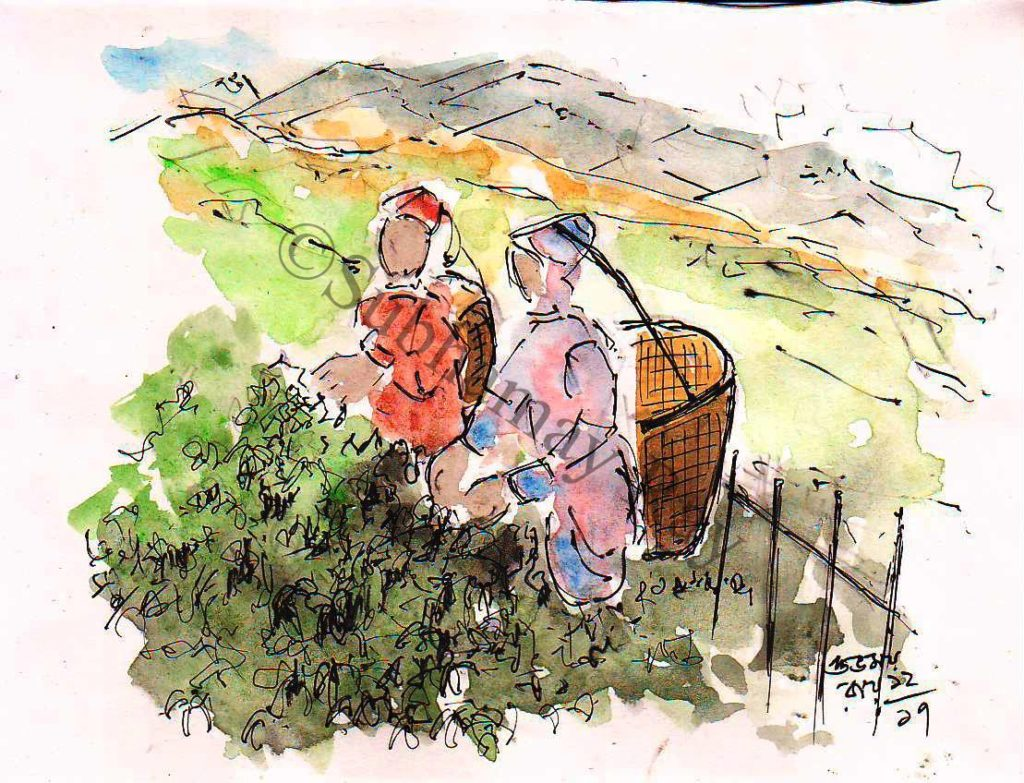 line and wash sketch of tea garden workers